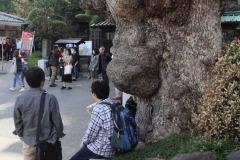 「大きな仁王の木の下で」江上 秀男さん(S44)