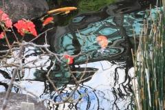 「池の中をのぞいてみると・・・」江上 秀男さん(S44)